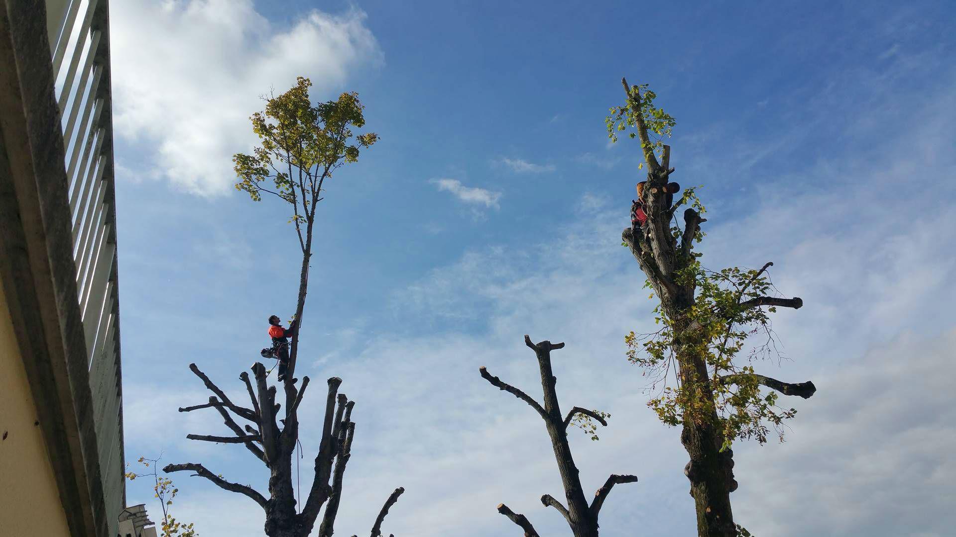 Paysagiste arbre et espace lagage auxerre abattage d for Paysagiste auxerre